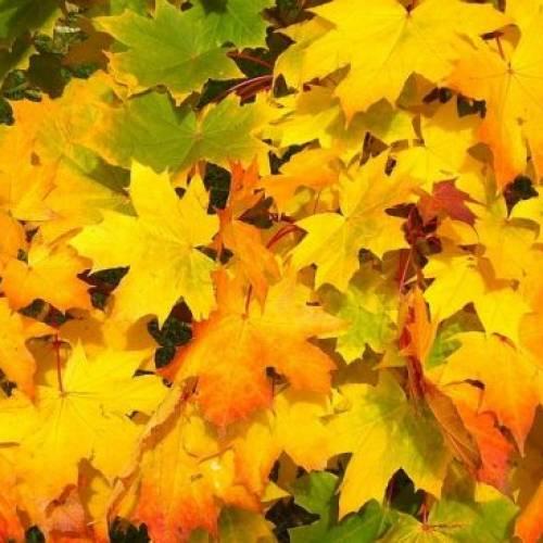 Setembro Amarelo: Prevenção ao Suicídio e Valorização da Vida